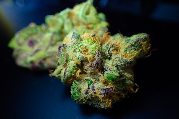 CLSK In Cannabis